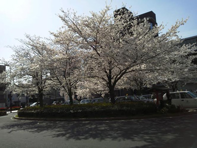 140402nijou_sakura01_s.jpg